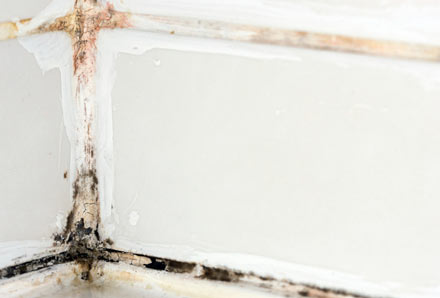 Mucor mold appearing on a section of drywall.