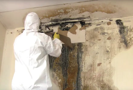 Scraping mold from a wall