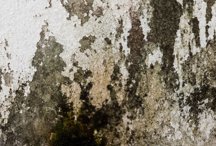 A bad case of Trichoderma mold forming against a wall.
