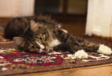 Remove mold on carpet