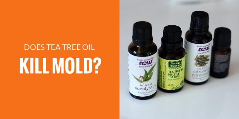 Does tea tree oil kill mold?
