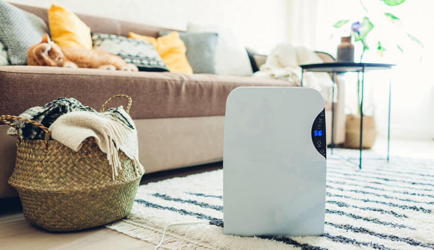 Best dehumidifiers for mold.