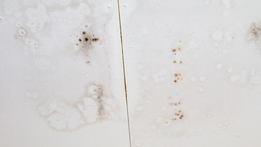 How to remove black mold from the ceiling.